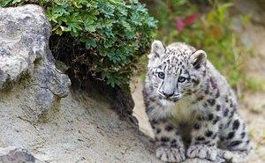 Леопард Симбад прибывает спецрейсом из Парижа в Сочи