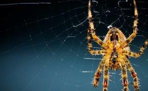 Краснодарский край облюбовали ядовитые пауки