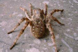 Краснодарский край оккупировали пауки