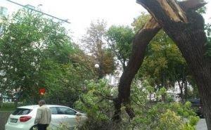 Ночной смерч в Сочи повалил деревья и оборвал провода