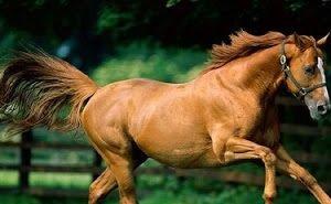 Во время шоу в Абрау-Дюрсо на глазах зрителей лошадь затоптала насмерть свою наездницу