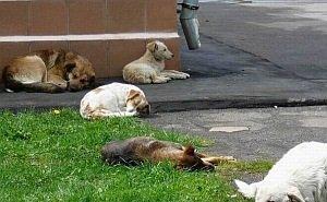 Власти Сочи готовы заплатить 0,5 млн рублей догхантерам за убийство животных