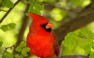 Сочинский орнитопарк отпразднует Международные дни наблюдения птиц