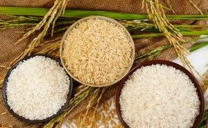 На Кубани чествовали лучших рисоводов края