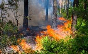 Дело по факту поджога леса под Геленджиком хотят закрыть