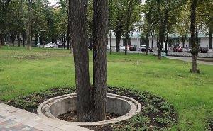 В Краснодаре проверят все деревья