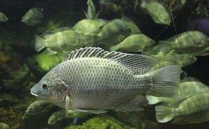 На Кубани разработают новую стратегию развития рыбохозяйственного комплекса