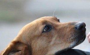 За убийство бездомной собаки или кошки в Сочи платят по 1270 рублей
