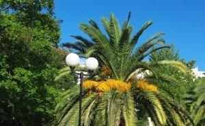 В Сочи начались тотальные проверки питомников экзотических растений