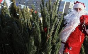 С 15-го декабря в Краснодаре заработают ёлочные базары