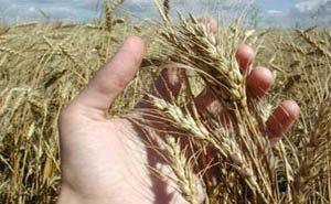 Новый бюджет Кубани максимально ориентирован на сельское хозяйство