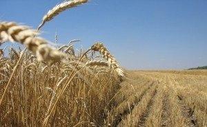 Кубань лидирует в России по агрострахованию