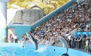 В сочинском дельфинарии происходит медленное уничтожение дельфинов