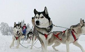 В горах Сочи туристам предлагают новую услугу