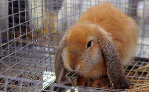 На Кубани строят кролиководческую ферму по европейским стандартам