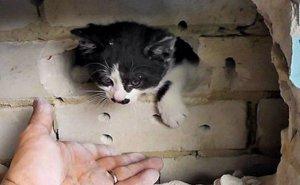 В Краснодарском крае коммунальщики жестоко убивают дворовых кошек с котятами