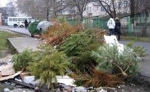 Что происходит с выброшенными за ненадобностью новогодними ёлками