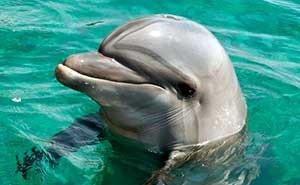 Дельфа, найденная в силосной яме, умерла