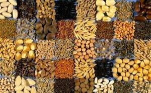 Кубанский бизнес хотят заинтересовать семеноводством