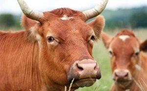 Всплыли факты массовых невыплат субсидий кубанским фермерам