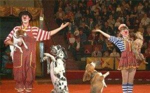 В этом году тематика цирковой премии