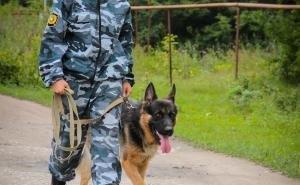Служебные собаки на 13,7% повысили результативность работы Сочинской таможни