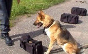 В Сочи демонстрируют свои способности лучшие служебные собаки Кубани