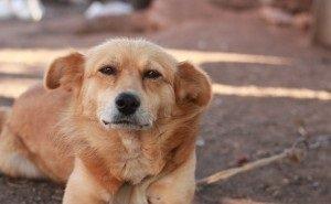 Краснодарские живодёры расстреляли до 40 беззащитных собак
