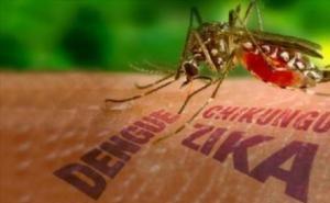 В Сочи начнут бороться с переносчиками вируса Зика