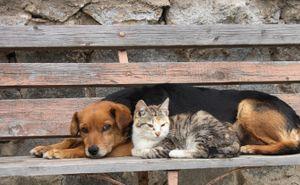 Краснодарцы требуют прекратить убивать животных в общественных местах