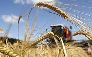 Кубанские аграрии хотят повысить урожайность зерновых на 12%