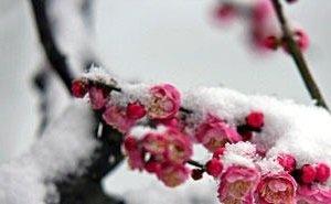 Идущие на Кубань заморозки угрожают плодовым деревьям