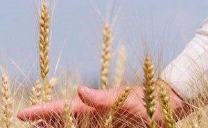 Власти Кубани требуют от каждого района план посевной