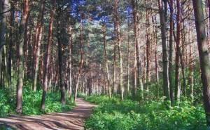 Экологи против очередной застройки зелёной зоны Краснодара