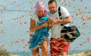 Пришла беда, откуда не ждали: Кубани угрожает саранча