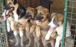 Единственный в Краснодаре приют для животных оказался под угрозой закрытия