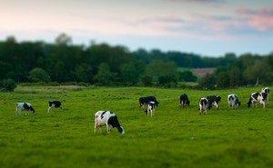 Депутаты ЗСК предложили отдать заброшенные животноводческие фермы в частные руки