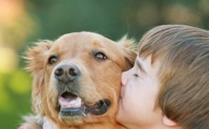 В Краснодаре на День города организуют парад домашних животных