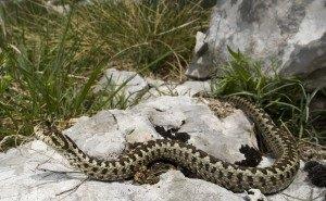 На Кубани змеи и дикие животные стали чаще нападать на человека