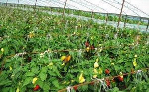 На Кубани появится селекционно-семеноводческий центр