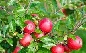 На Кубани откроется Учебный центр садоводства