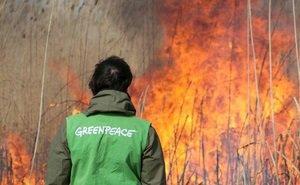 В Краснодарском крае совершено дерзкое нападение на экологов «Гринпис»