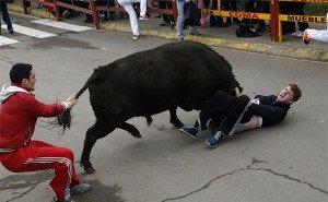 Разъярённый бык бегал по стройплощадке стадиона ФК «Краснодар»