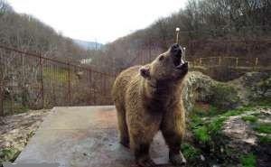 В горах Сочи девушку ранил медведь