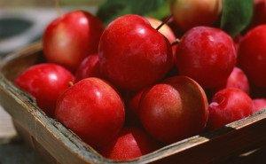 Садоводы Кубани отмечают небывалый урожай яблок