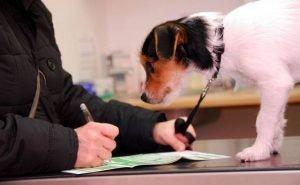 На Кубани вступает в силу новый закон о содержании домашних животных