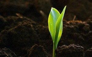 Аграрии Кубани считают слишком жёсткими поправки в закон о плодородии