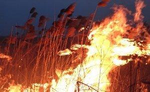 Противодействие экспедиции и нетушение пожара стоило государству 5 млрд рублей, - Гринпис