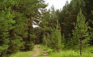 В Сочи нашли тело пропавшего 72-летнего грибника