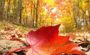 Экологи: сбор опавшей листвы — «деньги на ветер»